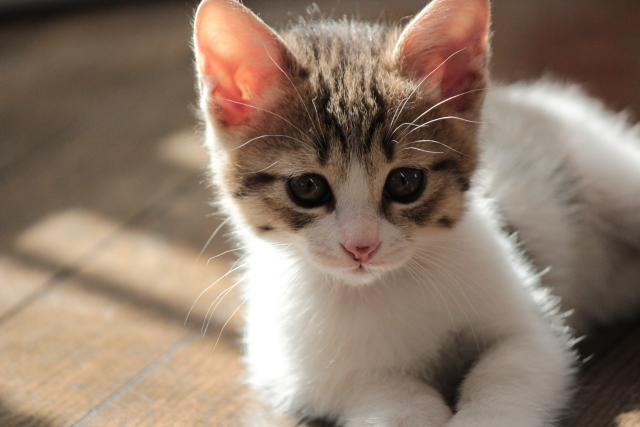 ペット可物件なのに、犬はOKで猫はダメ?
