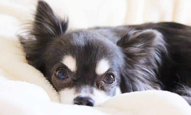 【大阪浪速区】ペット可賃貸の物件数・家賃はどのくらい?