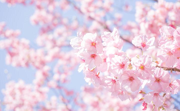 大阪市浪速区のお花見スポット・桜が美しい公園を紹介
