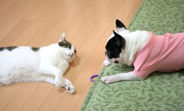 これから賃貸物件でペット(犬・猫)を飼う方は、退去費用にご注意